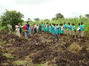 Agriculture providing jobs for the youth in Ghana